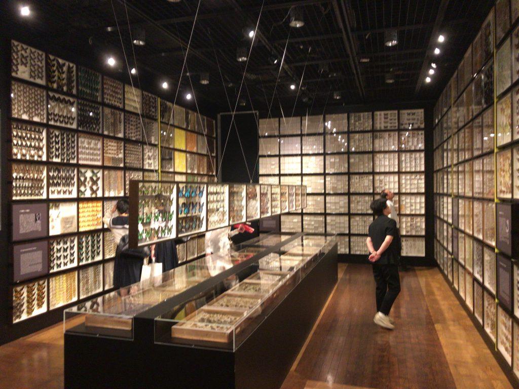 【文京区】日本トップの大学博物館『東京大学総合研究博物館』