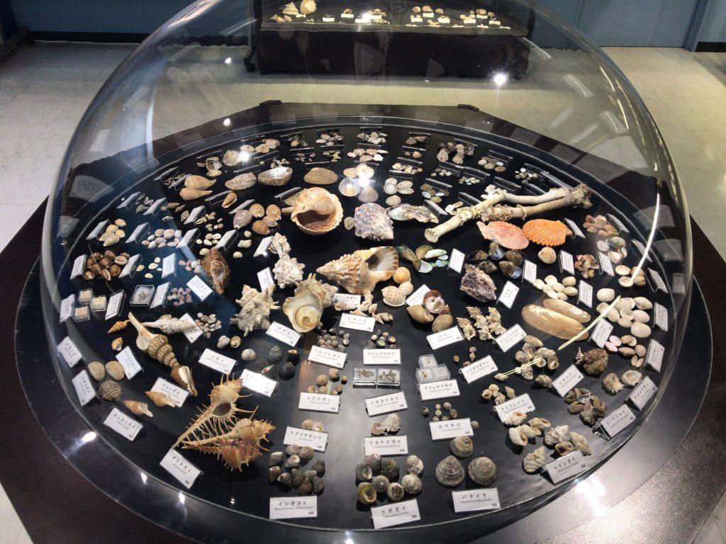 【真鶴町】海の宝石『遠藤貝類博物館』